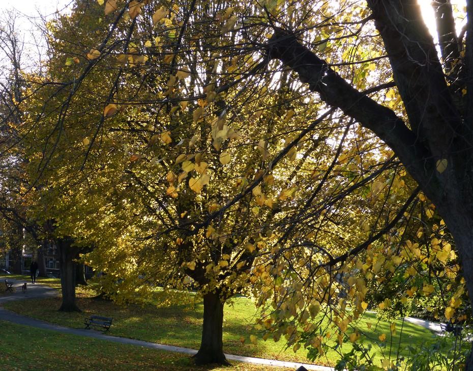 Park scene, Nov 7th '19