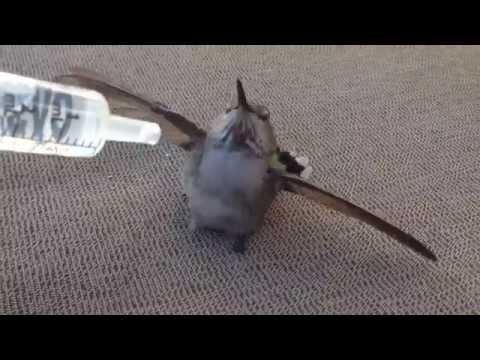 Hummingbird rescue - Will Salameh