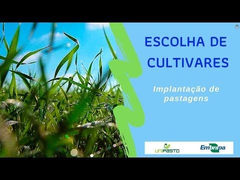 Escolha de cultivares | Série Pasto Certo