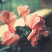 valentina vallone