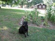Dixie,in the garden