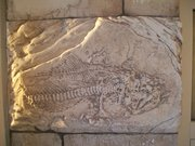 fish fossile