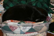 before it is the quilt for me, the cat had to test it