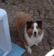 My Best Buddy, Puppy