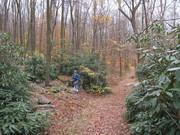 Amidst Past Peak Foliage & Rhododenron Alleé