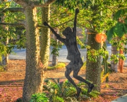 Little boy in the Silk floss tree