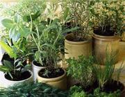 Urter & Planter