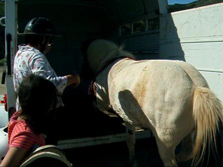 Cookie, Icelandic Horse, Trailer Loading