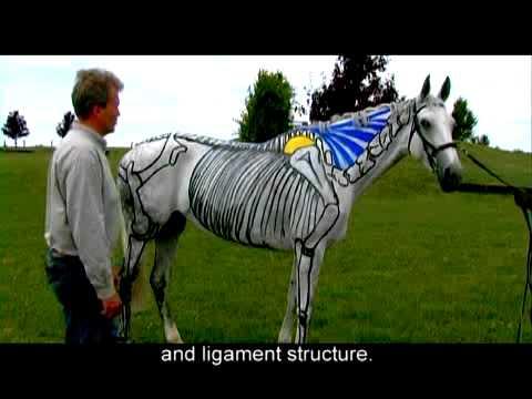 "Hoofcare.com Presents: ""If Horses Could Speak"" with Dr Gerd Heuschmann"