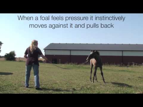 Foals first leading lesson