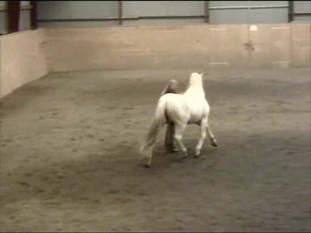 Free lunging in collection without side reins