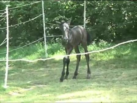 Foal in a hurry!