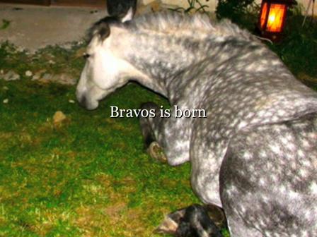 Bravos is born