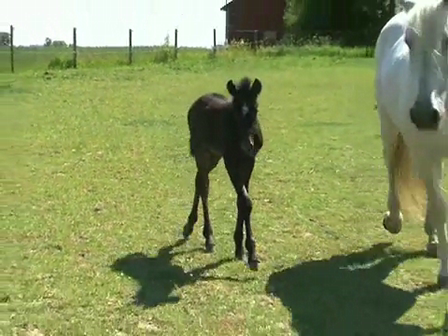 Stallions son is becoming a daddy's boy