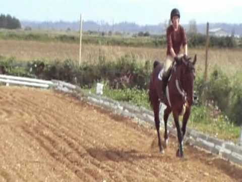 Retraining The Pacer ~ Standardbred Horse Retraining DVD