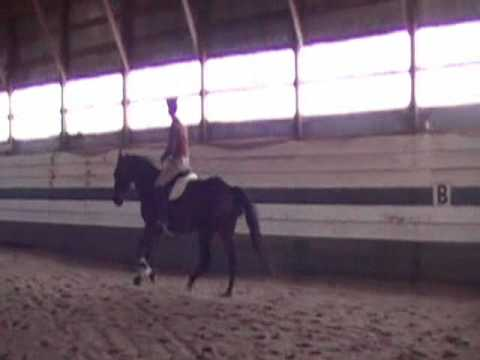 Pacer learning to canter (excerpt from Retraining The Standardbred ~ Standardbred Horse Training DVD