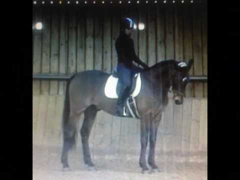 Intensive Training Days by www.equestriantrainer.co.uk
