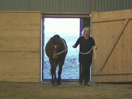 Long Reining 06 First lesson