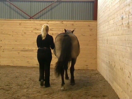 Long Reining 10 Shoulder Out; Common mistakes