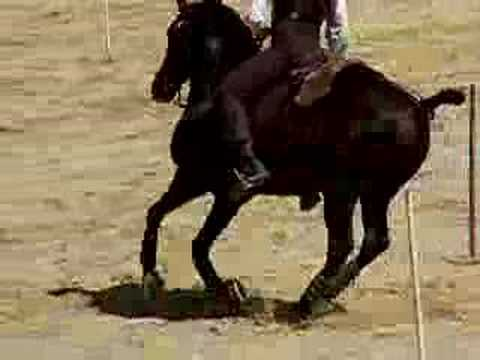 Lusitano Stallion - Working Equitation Speed Test