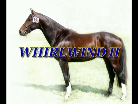 Whirlwind II - Canadian Warmblood stallion; Approved CWHBA