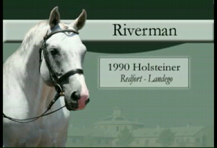 Riverman - Holsteiner stallion; Approved CWHBA