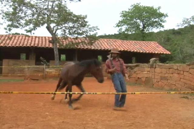 Training Horses With Body Language