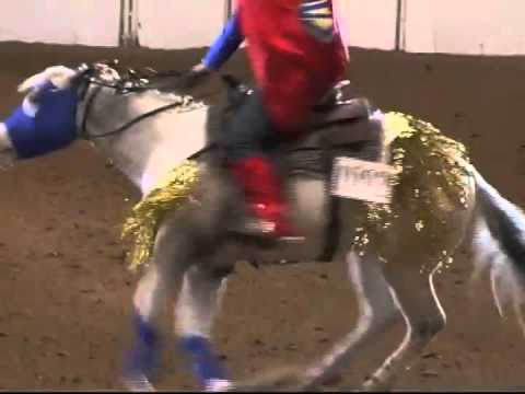 """Superman"" Reining Freestyle 2004 Appaloosa World Champion - tempi changes, bridleless spins and stops"