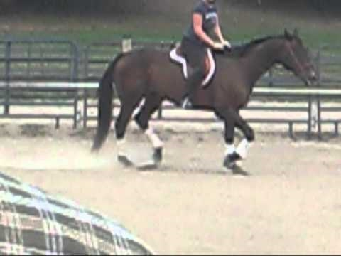 Riding Lesson on Lazz