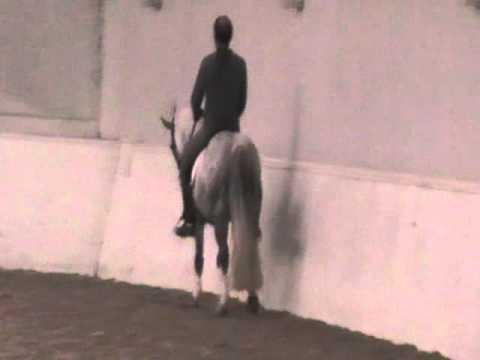 Champion Dressage Pony for sale