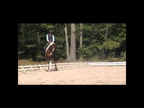 Bling, 7 year old 16.3h warmblood for sale at Five Stars Farm