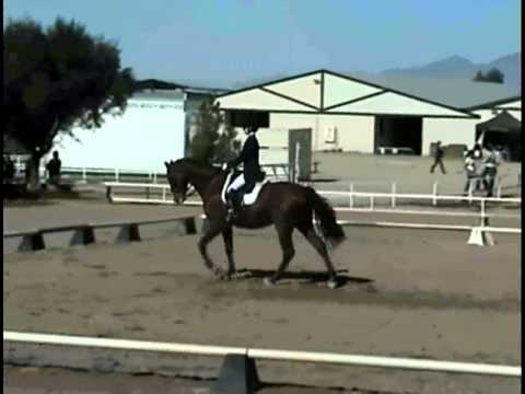 Catherine Chamberlain and Verdicci ~ Young Rider Team Test