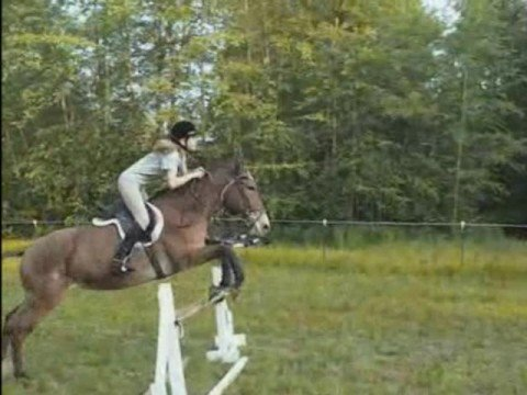Yes, Mules Like to Jump Too!