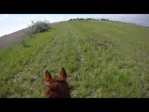 Beaumont Horse Trials Training Cross Country