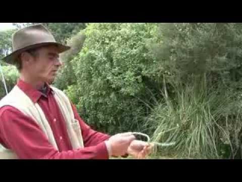 How to Make a Rope Halter with the Genuine Fiador Knot