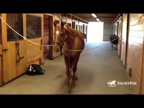 """Stuff No Rider Says"" Another Gem from SmartPak!!"