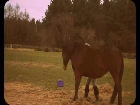 How To: Teach a horse to bow