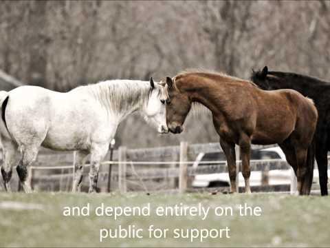 Horse Play Anti-Slaughter Response.wmv