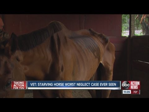 Woman Faces Neglect Charge after Starving Thoroughbred Found