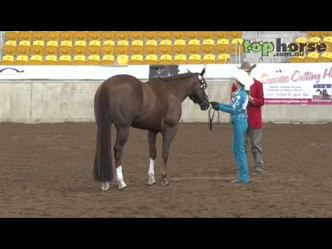 PHAA National Championship Show 2013 - Senior Youth Showmanship