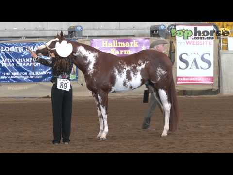 Judge Gives Expert Analysis of Grand Champion Halter Class