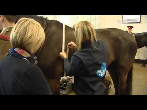 Cavarly Backing Horse Health Drive
