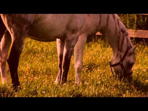 The Cavalia Odysseo Horses at Home on Vacation