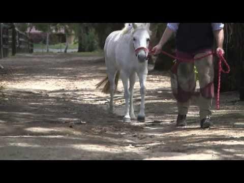 CSIRO's 3D Printer Titanium Horseshoe with Luke Wells Smith and Holly the Pony from Fran Jurga