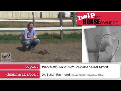 Equine Guelph:  Fecal Collection Demonstration