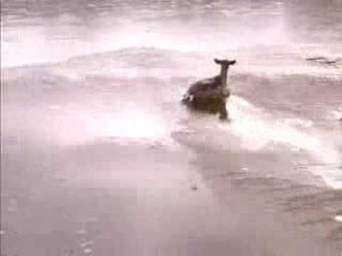 How to blow a deer out of a frozen lake with a helicopter