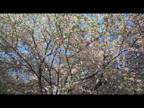 Beautiful Earth - When Spring Begins (The Shadowlands)