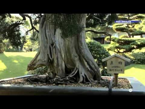 asie insolite Bonsai et jardin Japonais