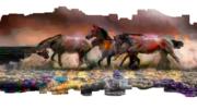 Horses furry