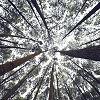 Corso via webinar Ecopsicologia nell'Educazione: I SOGNI DEGLI ALBERI
